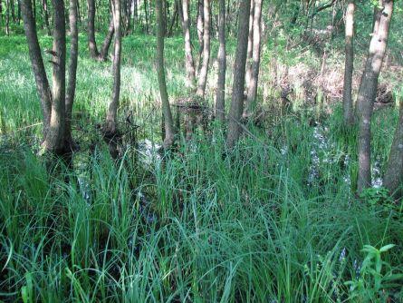 Место под застройку на болотистой местности