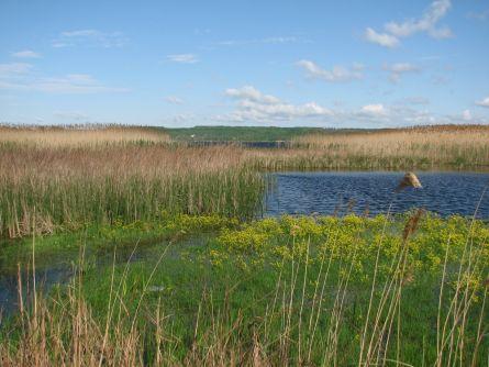 Заповедная зона Краснооскольского водохранилища