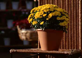 Как посадить многолетние растения